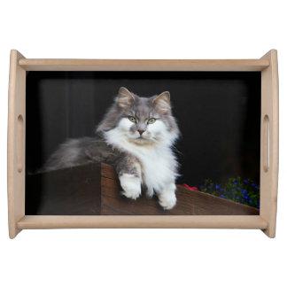 Beautiful Cat Serving Tray