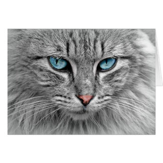 Beautiful Cat with Blue Eyes Card