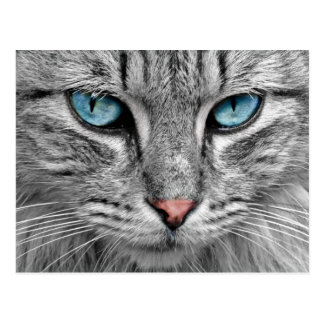 Beautiful Cat with Blue Eyes Postcard