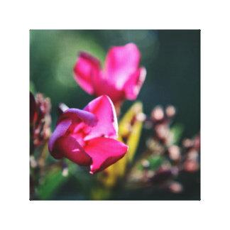 Beautiful Cherry Blossom Canvas Print