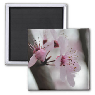 Beautiful Cherry Blossom Flowers Square Magnet