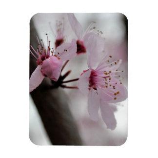 Beautiful Cherry Blossom Flowers Rectangular Photo Magnet