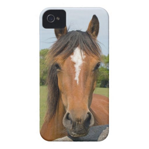 Beautiful chestnut horse photo blackberry bold cas blackberry cases