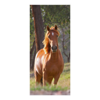 Beautiful chestnut horse photo bookmark custom personalized rack card