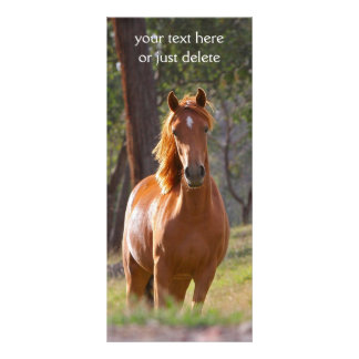 Beautiful chestnut horse photo bookmark full color rack card