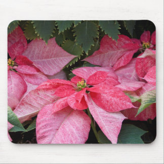 Beautiful Christmas Poinsettia Photo Mouse Pad