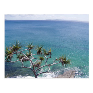 Beautiful Clear Sea Of Pandanus Postcard