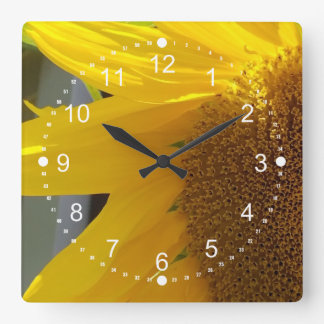 Beautiful Close Up of Sunflower Square Wall Clock