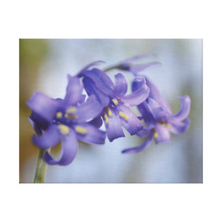 Beautiful close-up photo bluebell flower canvas print