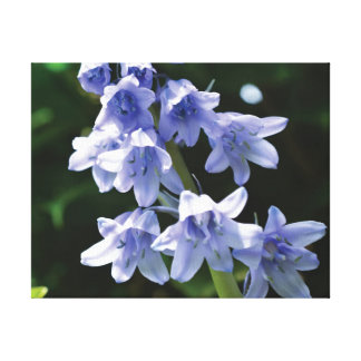 Beautiful close-up photo bluebell on green canvas print