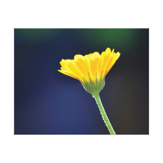 Beautiful close-up photo orange flower on blue canvas print