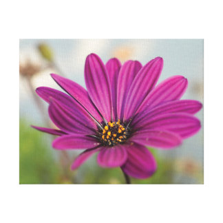 Beautiful close-up photo pink flower against sky canvas print