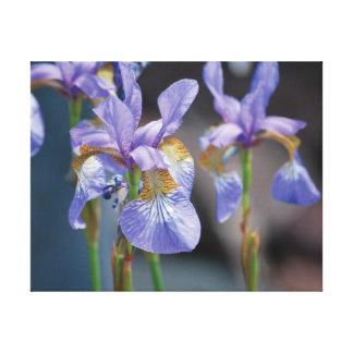 Beautiful close-up photo purple flower on blue canvas print