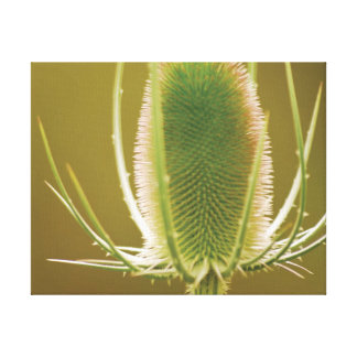 Beautiful close-up photo teasel canvas print