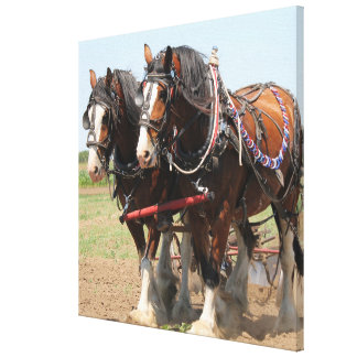 Beautiful clydesdale horses ploughing canvas print