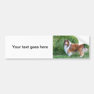 Beautiful Collie dog portrait bumper sticker, gift Bumper Sticker