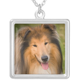 Beautiful Collie dog portrait necklace, gift idea Silver Plated Necklace
