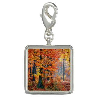 Beautiful colorful autumn fall forest sunbeams
