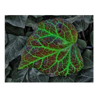 Beautiful colorful autumn leaf, postcard