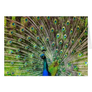 Beautiful, colorful peacock card