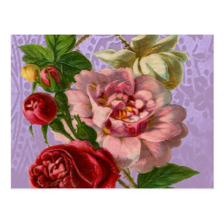 Beautiful Colorful Roses Postcards