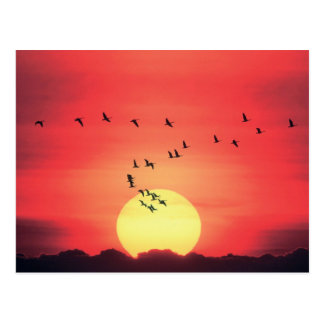 Beautiful colorful sunset with birds flying postcard
