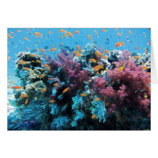 Beautiful colorful underwater world card