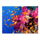 Beautiful Coral Reef Naturescape Postcard