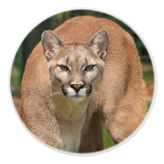 Beautiful cougar close-up ceramic knob