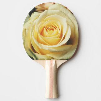 Beautiful cream Rose