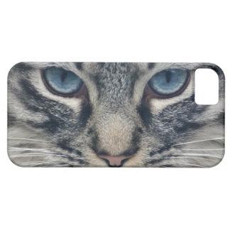 Beautiful cute kitty cat kitten animal lover iPhone 5 case