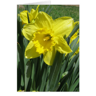 Beautiful daffodil Blank Card