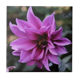 Beautiful Dahlia Flower Small Square Tile