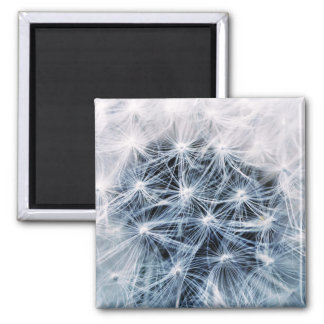 beautiful delicate dandelion flower photograph magnet