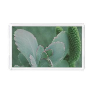 Beautiful Desert Plant Art Photograph Acrylic Tray