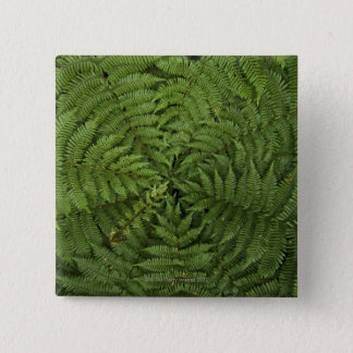 Beautiful detail of young ponga fern tree in 15 cm square badge