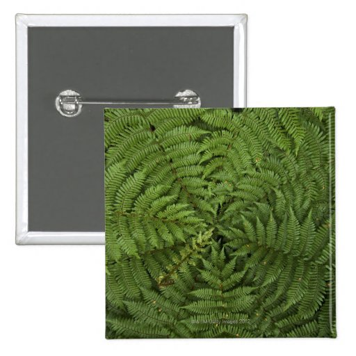Beautiful detail of young ponga fern tree in pinback button