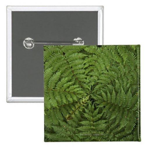 Beautiful detail of young ponga fern tree in pinback button