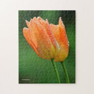 Beautiful Dew-Kissed Pastel Orange Tulips Puzzle