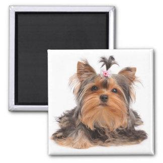 Beautiful dog magnet