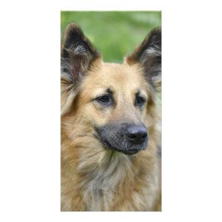 Beautiful Dog Photo Card Template