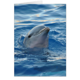 Beautiful Dolphin Card