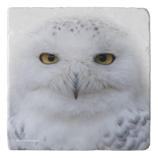 Beautiful, Dreamy and Serene Snowy Owl Trivets