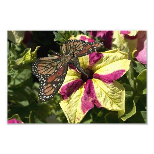 Beautiful Elephant Butterfly Photo Art