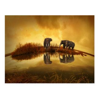 beautiful elephant Thailand sunset Postcard