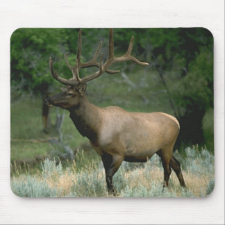 Beautiful Elk Mouse Pad