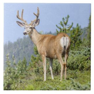 Beautiful elk nature scenery large square tile