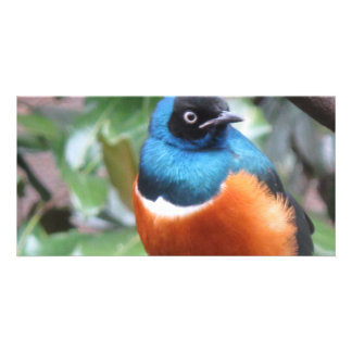 Beautiful Exotic Bird Perched Photo Cards