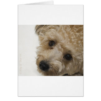 Beautiful Eyes of a Yorkie Poo Puppy Greeting Card