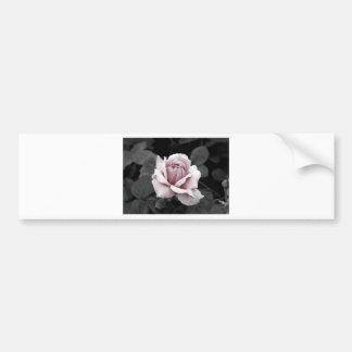 Beautiful faded pink rose print bumper sticker